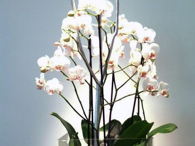 Centros De Flores Con Orquideas En Granada Env 237 O A Domicilio