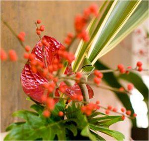 plantas para decoración de lugares públicos