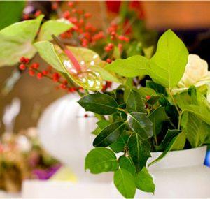 plantas para tiendas y restaurantes