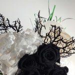 flores liofilizadas blanco y negro